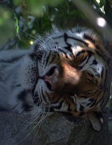 Zooführung: Guten Nacht Zoo