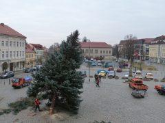 Adé Weihnachtsbaum